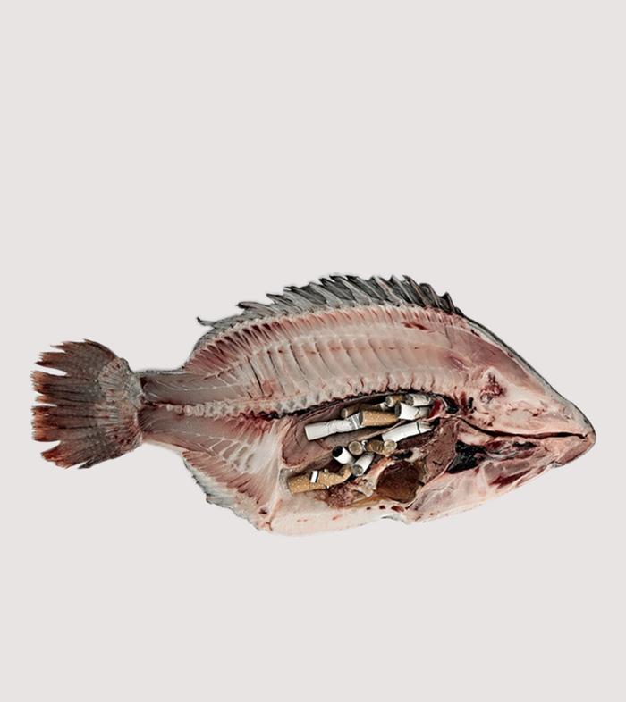 Denizlerin ezeli düşmanı: Sigara İzmaritleri